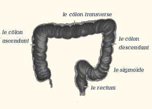 gros intestin longueur